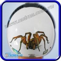 Mũ Bảo Hiểm 3D Spider ATN04G-3D/73